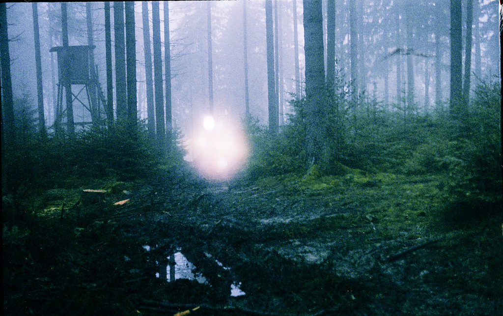 forest landscape with a dot of light